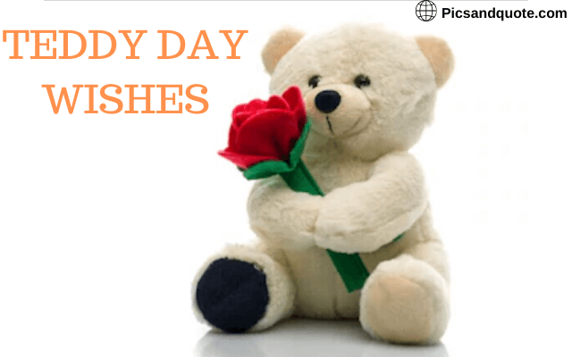 teddy day images dp