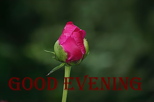 Have A Great Evening Images