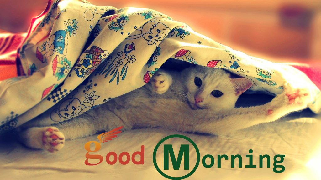 Funny Good Morning Messages Images